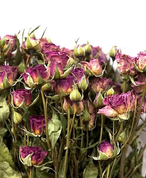 rosas de pitiminí secas
