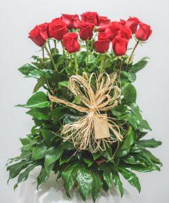 Imagen del centro de rosas rojas en paralelo